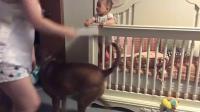 家长要打小孩 狗狗出来劝说 萌翻了