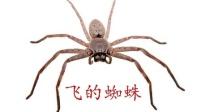 飞的蜘蛛-七日杀A16b129联机-1