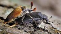 看鉴地理 第81集:北方常见20毫米的昆虫捕食手法竟如此血腥!猎物必死无疑!
