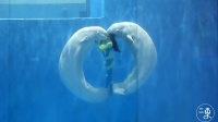 美女驯养员与白鲸在水下共舞 精彩绝伦 758