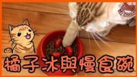 【巧克力】『橘子冰的日常』- 橘子冰与慢食碗