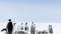 南极冰水挑战赛,野爸被冻坏
