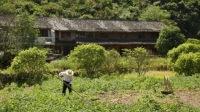 浙江深山藏着一个长寿村 90岁的夫妻还很恩爱 164