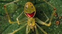 比蜘蛛精还迷人的奇异蜘蛛, 只因为它们吃了这个成了精!