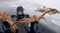 挪威帝王蟹泛滥成灾, 专家想要引进天敌, 结果发现没有任何作用!