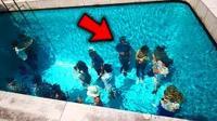 世界上5个罕见的奇葩游泳池! 真实存在, 最后一个想去体验一下
