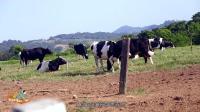 暑假到初鹿牧场去亲手制作鲜奶冰激凌