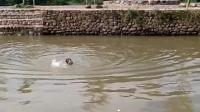 荒唐教练带七岁孩子游泳, 命令跳下深河! 称不多喝点水学不会!