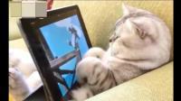 喵主子最近迷上了动画片, 一边看还要一边给它喂零食, 太幸福了这