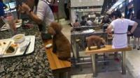 男女用公共餐具喂狗喝奶茶 网友: 没公德