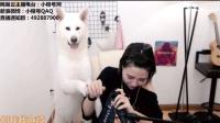"""女主播直播时上演""""人狗大战"""", 网友: 这个狗应该是想红了吧-音乐-高清完整正版视频在线观看-优酷"""
