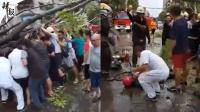 惨剧!女子台风中被倒下大树砸中身亡