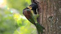 神奇大自然鸟类奇观第1集《金佛山精品鸟类大合集》上集 多种鸟叫声
