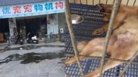 寄养一小时后死亡, 店主说狗狗自杀