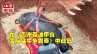 """云南一斗牛王被""""厚葬"""" 身上盖满锦旗"""