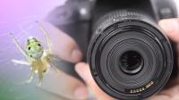 几块钱让你的镜头变微距——镜头反装【小九摄影ECP】