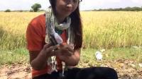 农村姐姐玩陷阱捕鱼, 捕到了很多大鱼, 网友表示: 羡慕嫉妒恨呀