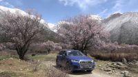 在西藏看到最美的桃花 49