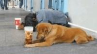 【你们说 狗狗和主人谁会要得更多呢】搞笑视频 笑死人不偿命 轻松时刻