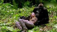 夫妇探望老朋友大猩猩与其温馨互动