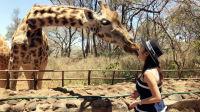 更成都 | 肯尼亚的狂野与原始,自贡女孩的浪漫与温情