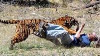 动物伤人事件: 老虎直接生扑男子, 女子蹦极时遭水底鳄鱼攻击