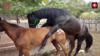 身为一匹公马长得帅很关键, 母马看了都喜欢!