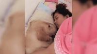 女主人肚子痛躺在床上休息, 狗狗动作轻柔守候在身旁!