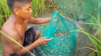 10米长的地笼, 农村老农放在稻田水渠口, 一天游进来上百斤小鱼