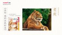 正能-《水彩 我的水色时光》-老虎