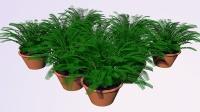 C4D植物生长插件 10 花朵生长动画的制作