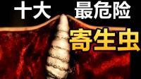 全球10种最危险寄生虫, 仅中国就有7种!