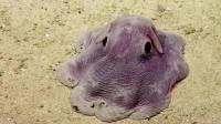 奇葩动物们的繁衍方式真是独特