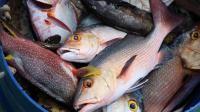 天上会掉鱼? 揭秘全球最罕见的自然现象, 满大街活鱼让人兴奋!
