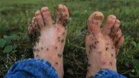 美国恐怖吸血蚊子, 瞬间让动物变干尸, 人们都不敢出门