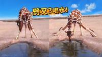 长见识 长颈鹿原来这样喝水的 56
