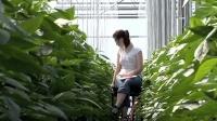 看看国外农民怎么实现集团化种菜-这工作太舒服了