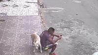男子路边玩手机, 被狗狗当柱子撒尿