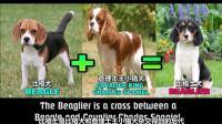 奇闻趣事, 令人惊奇的15种杂交犬