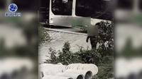 公交司机加气途中摘光两棵柿子树 气坏柿子树主人