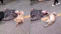 主人当街醉倒路边 爱犬陪伴身旁感动人心