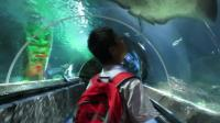 奥克兰水族馆, 新西兰旅游景点