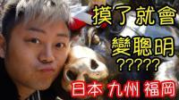 [游记134]怒吃日本九州最出名的拉面!