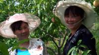 TSH视频-贵州山歌-陪哥唱到一百年