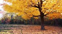 超级漂亮的秋天景色
