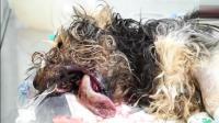 流浪狗被打断下巴还顽强的活着, 幸亏及时遇到好心的人