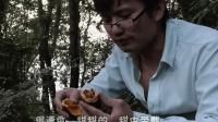 小村故事: 农村小伙带你走进大山深处采摘野果, 有多少人吃过呢?