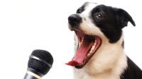 狗子生活得无忧无虑, 开心地唱起歌来