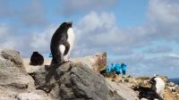 世界尽头的生机 在南极过圣诞赏企鹅 132