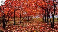 各地进入红叶最佳观赏期
